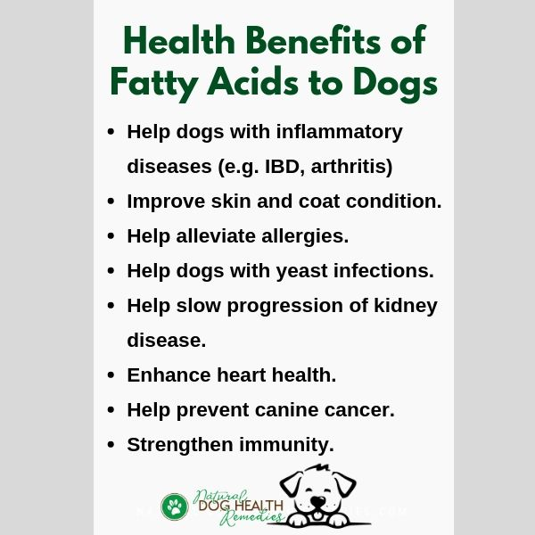 Fatty Acids Benefits to Dogs