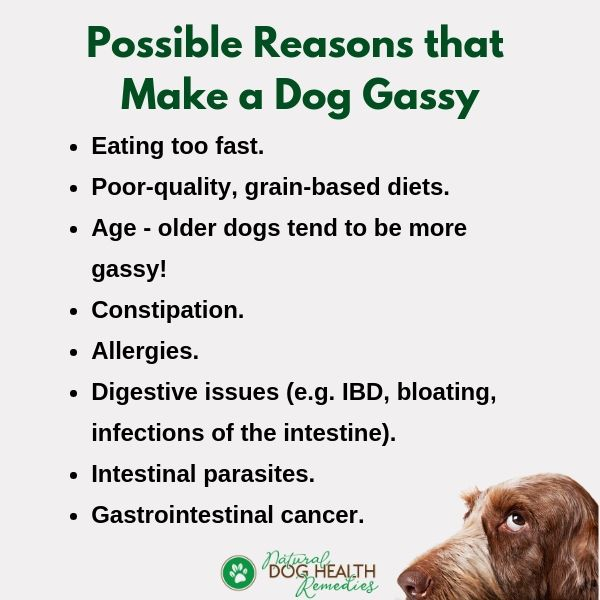 Dog Flatulence Causes