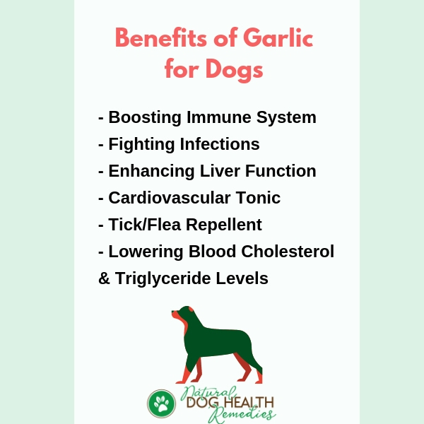 Garlic Benefits for Dogs