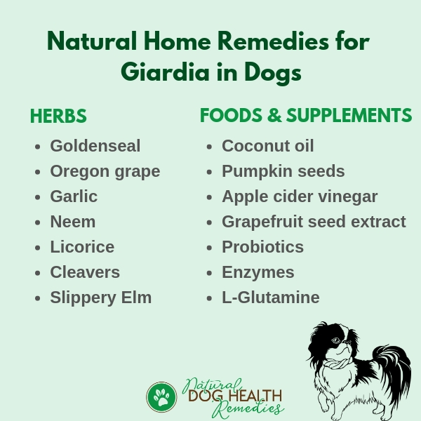 Home Remedies for Giardia in Dogs