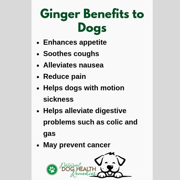 Benefits of Ginger to Dogs