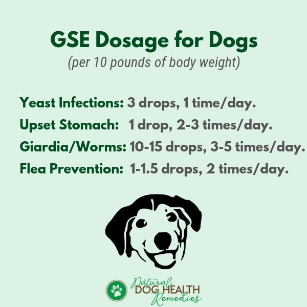 GSE Dosage for Dogs