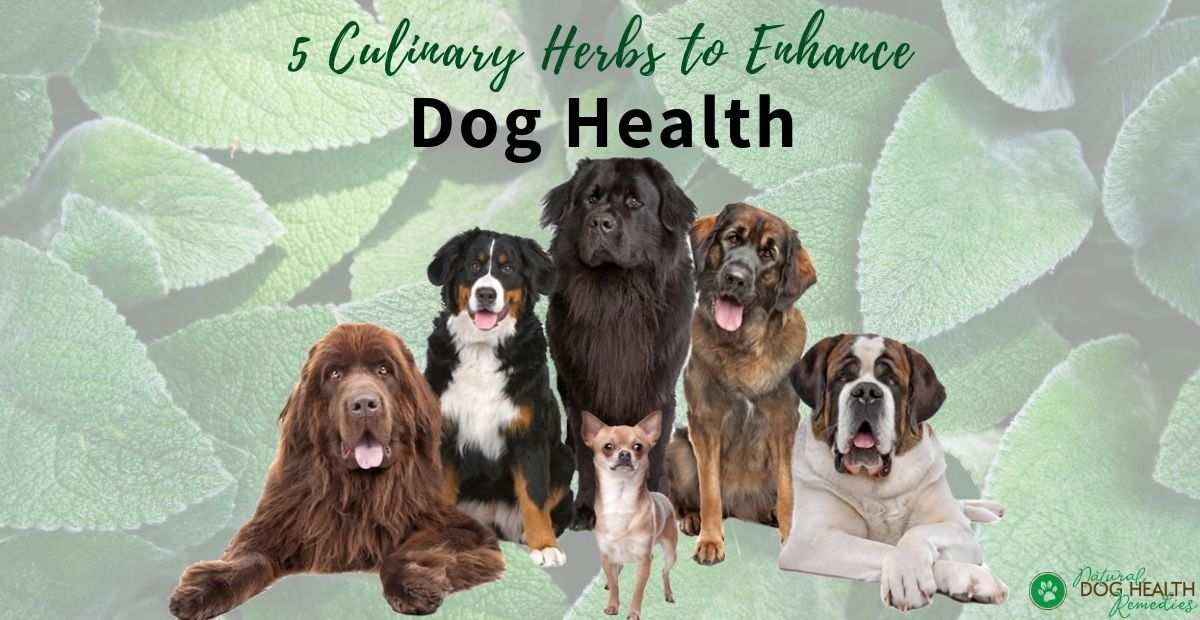 Herbs for Dog Health