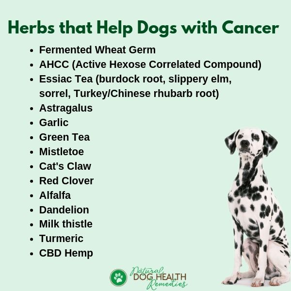 Herbs for Canine Cancer