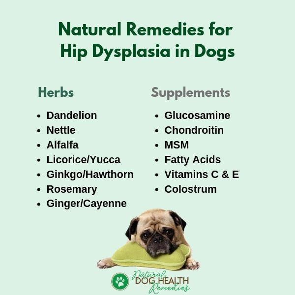 Natural Remedies for Dog Hip Dysplasia