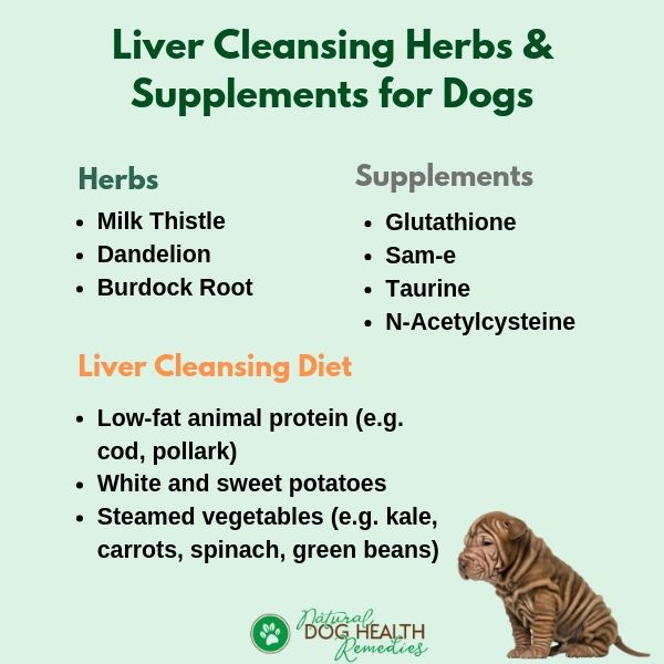 Liver Cleanse for Dogs