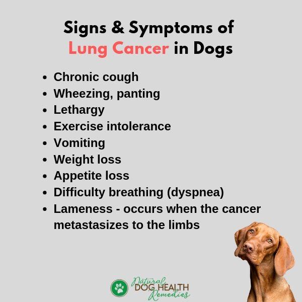 Dog Lung Cancer Symptoms