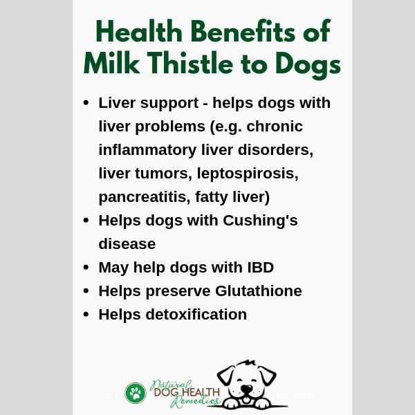 Milk Thistle for Dogs Benefits