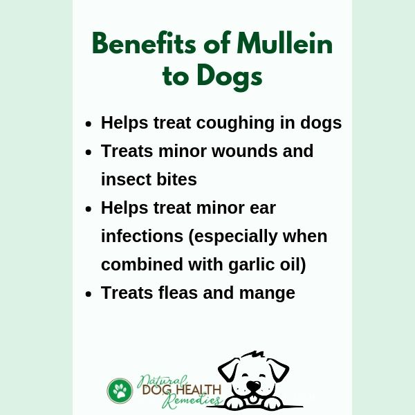 Benefits of Mullein to Dogs
