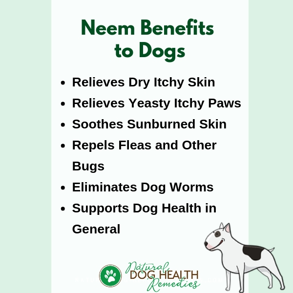 Neem Benefits for Dogs