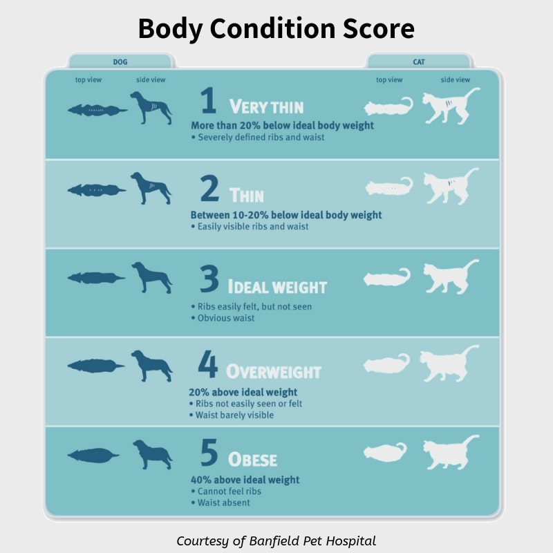 Body Condition Score for Dog Obesity