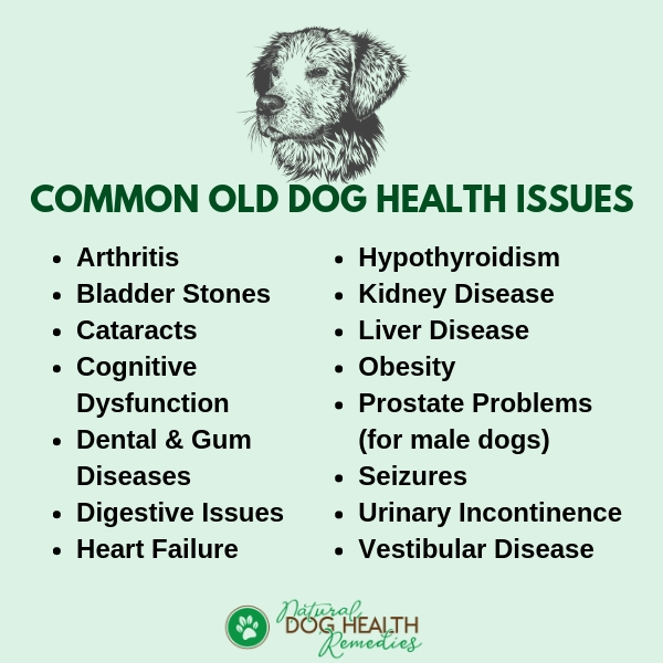 Old Dog Diseases