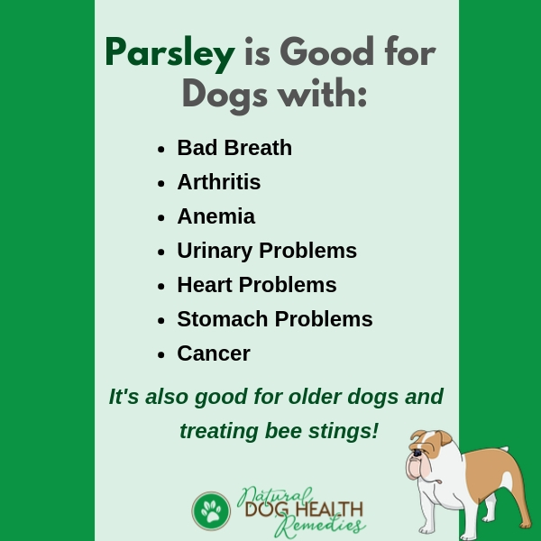 Parsley Benefits for Dogs