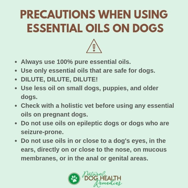 Precautions when using Essential Oils on Dogs