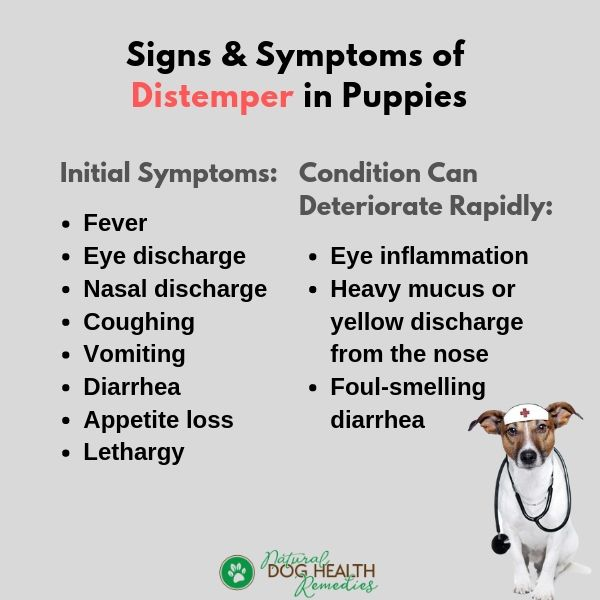 Puppy Distemper Symptoms