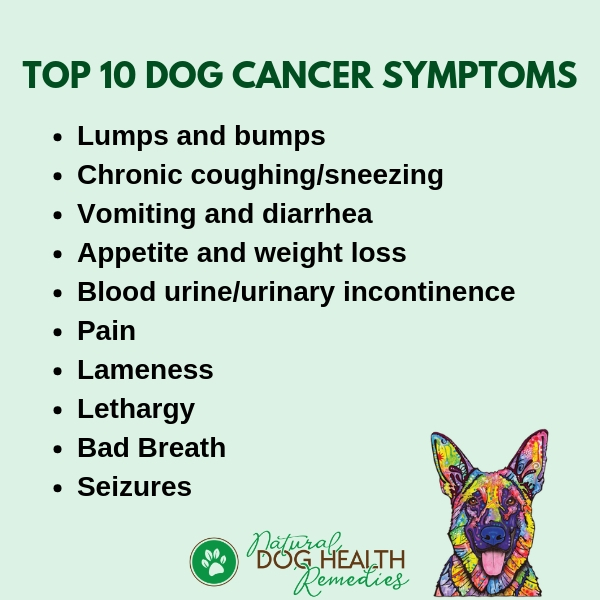 Symptoms of Dog Cancer - Be Aware of These Signs