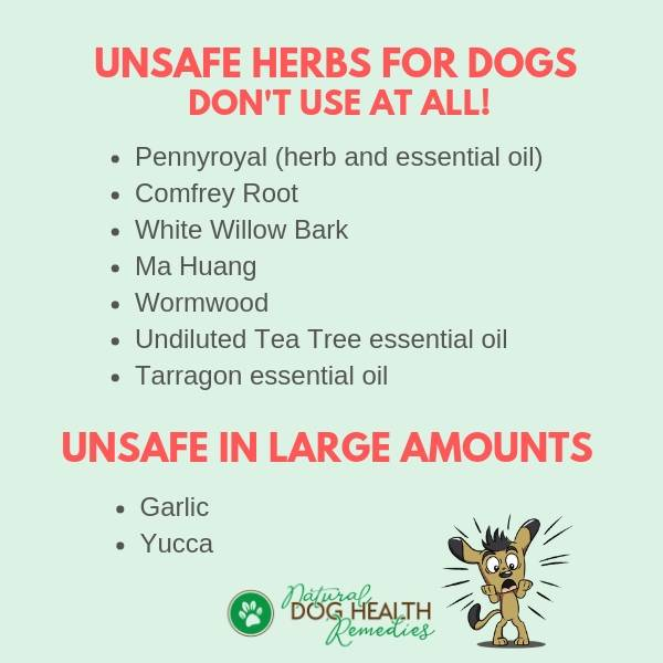 Unsafe Herbs for Dogs   Possible Side Effects of Herbs on Pets