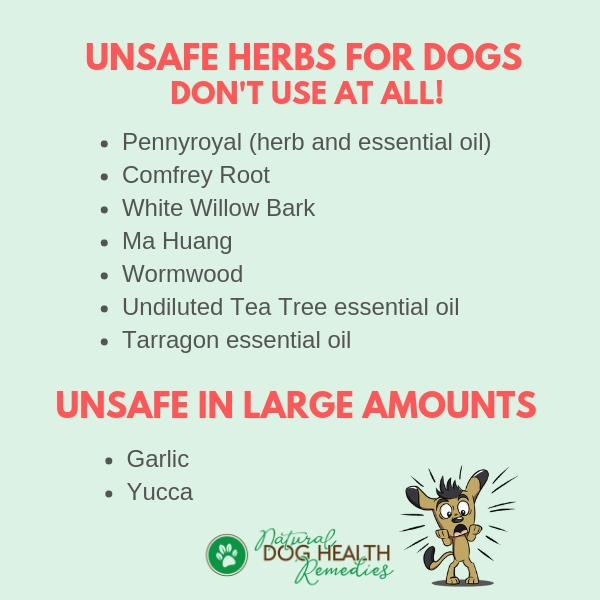 A List of Unsafe Herbs for Pets